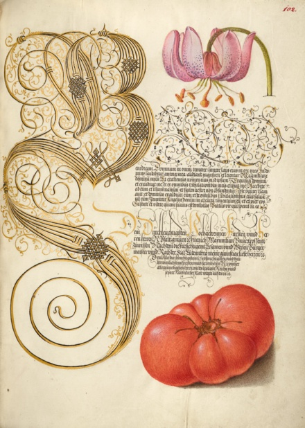 Tomato and calligraphy